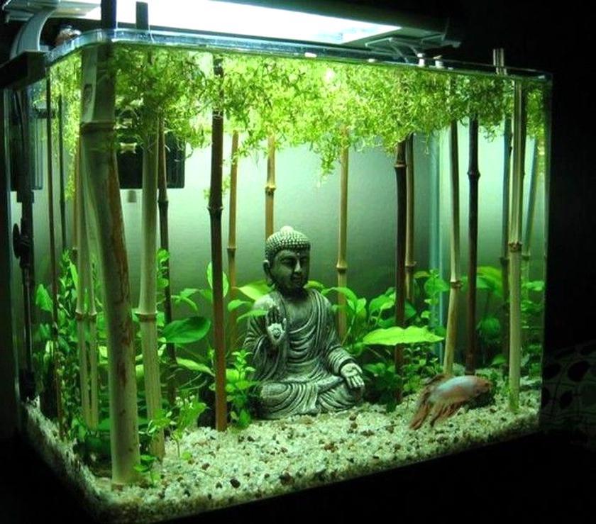 Aquarium Deko Gebraucht Kaufen Nur 4 St Bis 65 Gunstiger