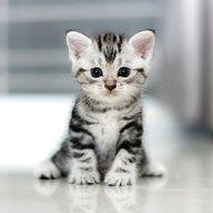 Baby Katzen Kaufen München