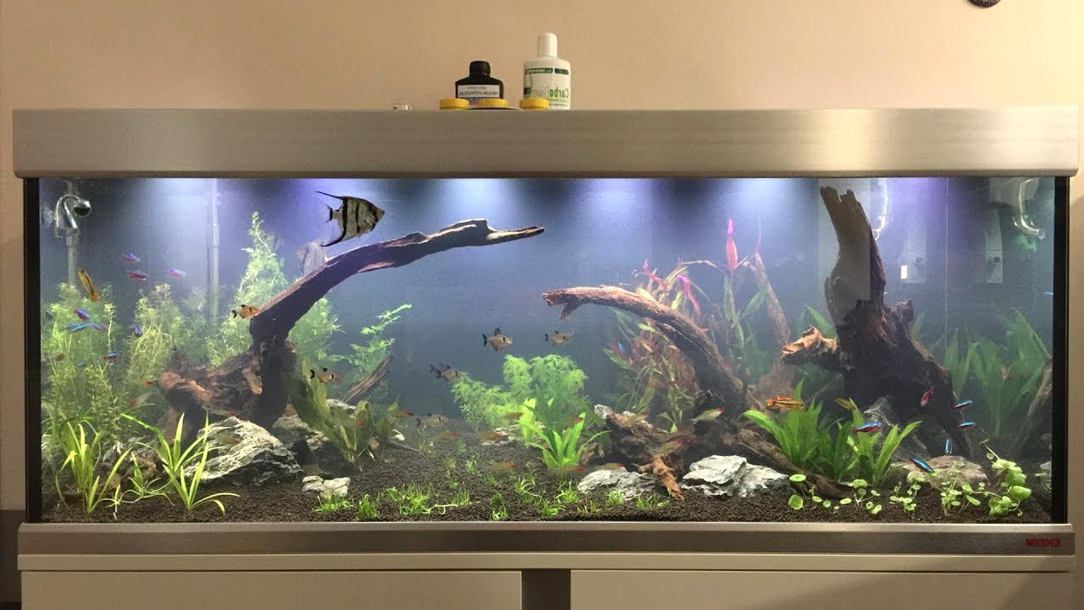 Aquarium 300 Liter Gebraucht Kaufen 3 St Bis 60 Gunstiger