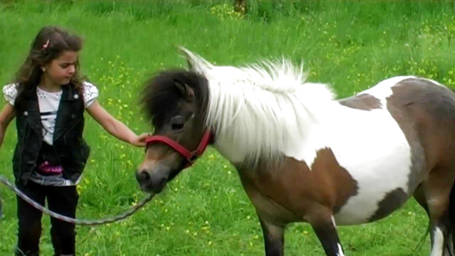 kleines pony gebraucht kaufen