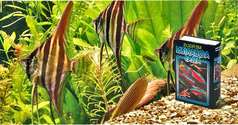 mergus aquarien atlas gebraucht kaufen
