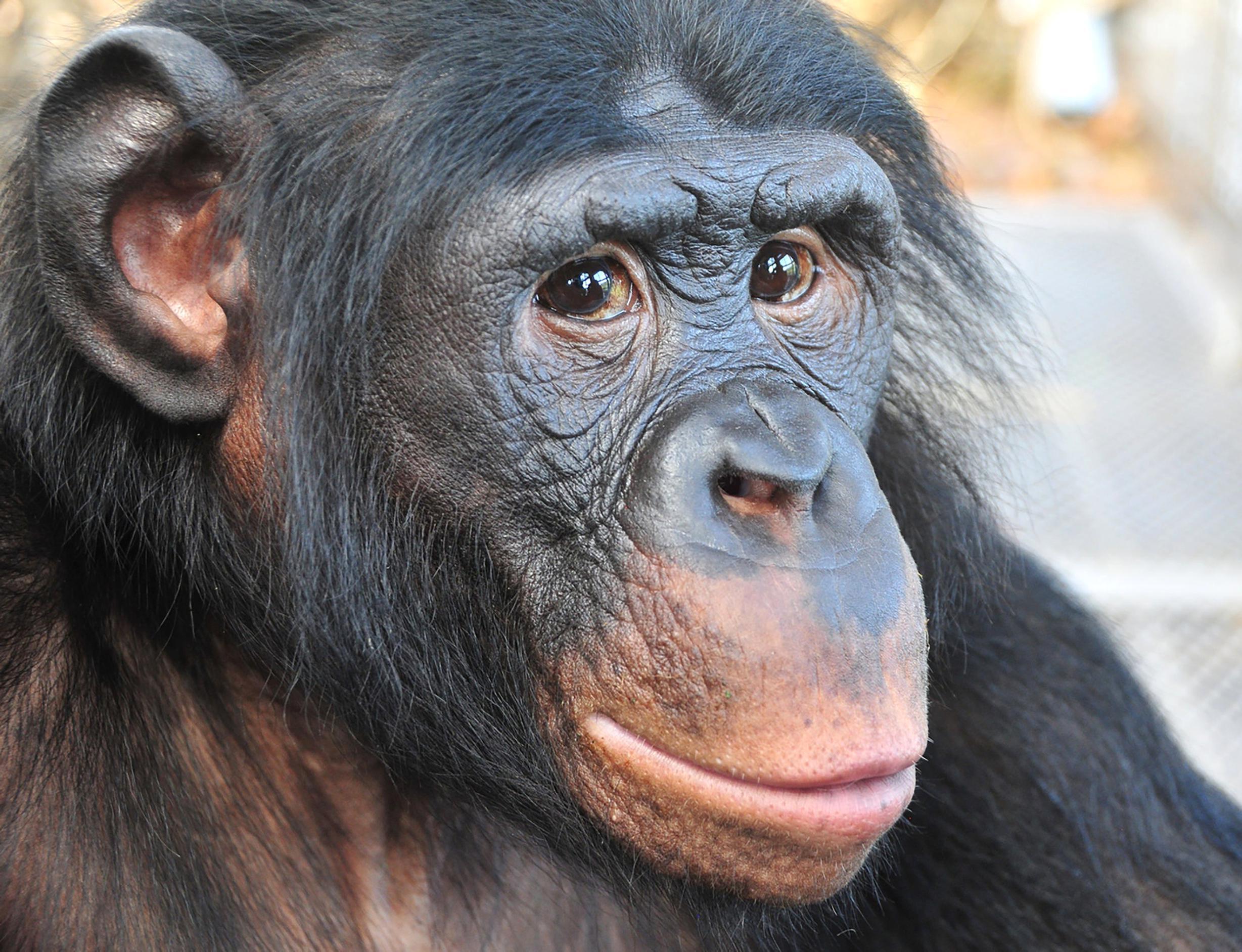 ape gebraucht kaufen nur noch 4 st bis 75 g nstiger. Black Bedroom Furniture Sets. Home Design Ideas